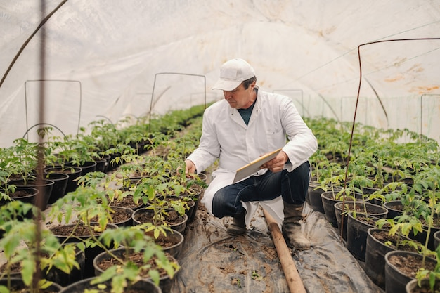 Agronomist in white uniform holding clipboard and checking on tomato while crouching in nursery garden.