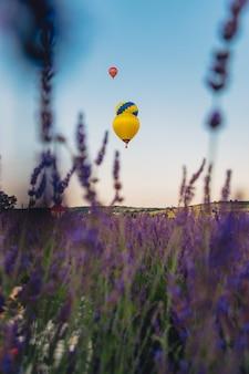 라벤더 밭 복사 공간 위에 바구니가 있는 공기 풍선