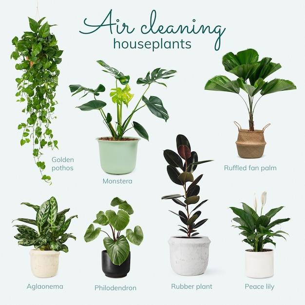 침실을 위한 공기청정 관엽식물