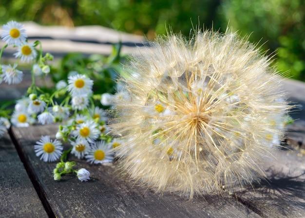 傘(タンポポに似ています)と木製のテーブルのフィールドデイジーの形で空気乾燥した花。