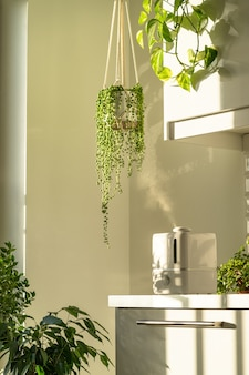 Air humidifier during heating period at home surrounded by houseplants, steam from diffuser. plant care