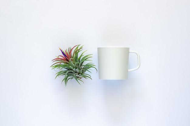 Воздушное растение - тилландсия с цветком и чашкой кофе на белом фоне.