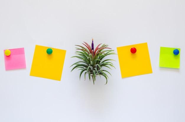 Воздушное растение - тилландсия с цветком помещает между красочными бумажными записками на белом фоне.