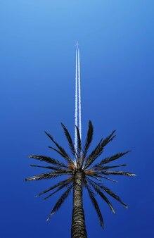 항공 여행 열대 휴가 직통 야자수