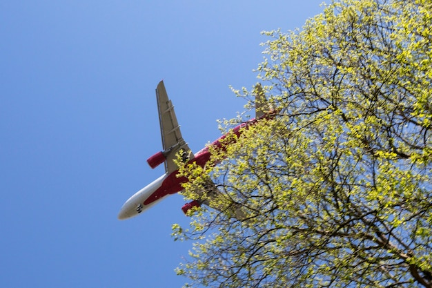 Aircraft approaching on final over tropical island a plane in a blue sky near a tree branch
