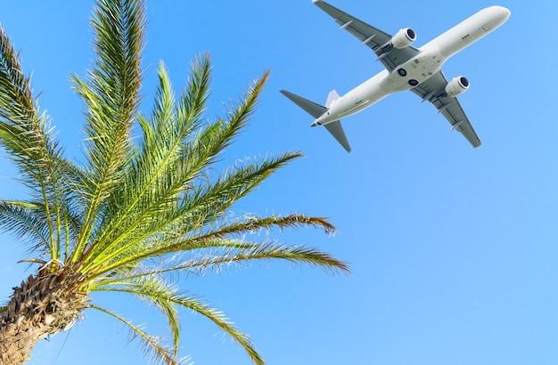 맑고 푸른 하늘 배경에 열대 야자수 위를 나는 비행기. 여름 휴가 및 여행 개념의 공간을 복사합니다.