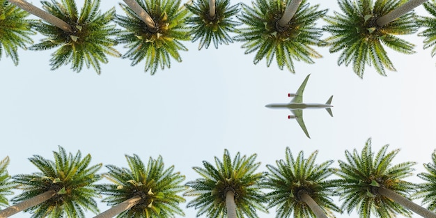 Airplane flying over palm trees summer time