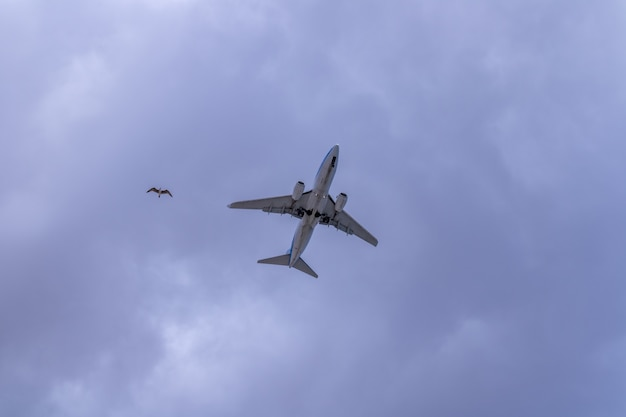 An airplane and a seagull fly together