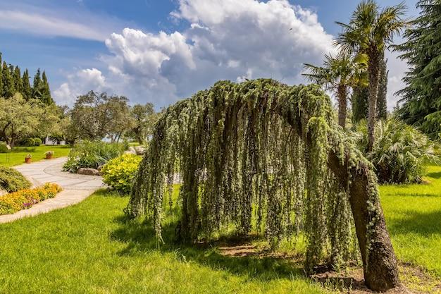 Айвазовский парк райский ландшафтный парк плачущий кедр партенит крым