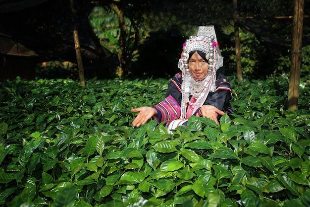 アラビカとロブスタコーヒー木、コーヒープランテーションを持つ女性akhaの丘。