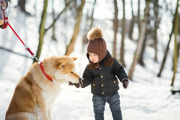 Akita-inu takes something from little boy's hand standing in a winter park