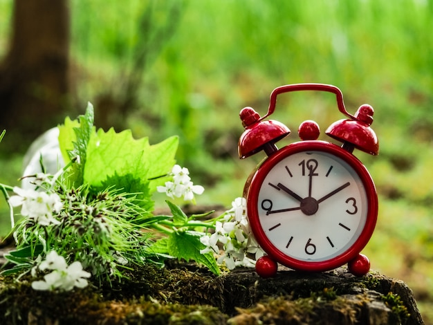 Alarm clock on a stump with a bouquet of herbs, nature, nature time, meditation, time spring, summer.