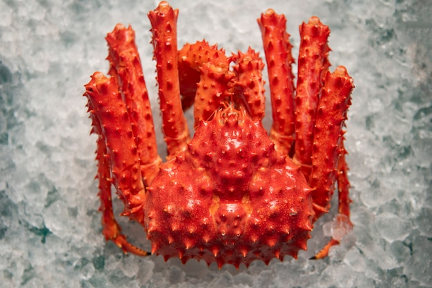 Alaskan king crab on ice top view