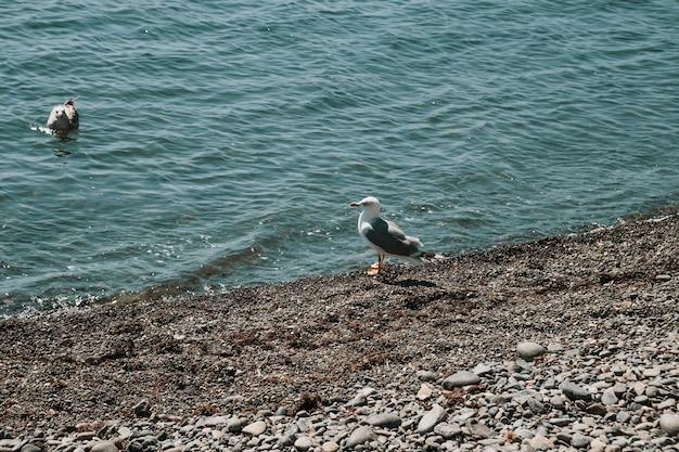 The albatross seabird stands on the seashore.