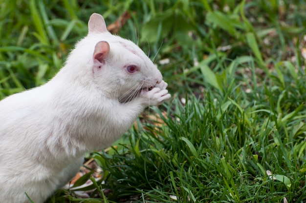 새 씨앗을 먹는 알비노 다람쥐가 새 피더에서 떨어졌습니다.