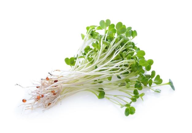 Alfalfa sprouts or kai wah-rei on white background