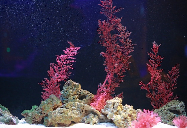Alga and corals in aquarium tank