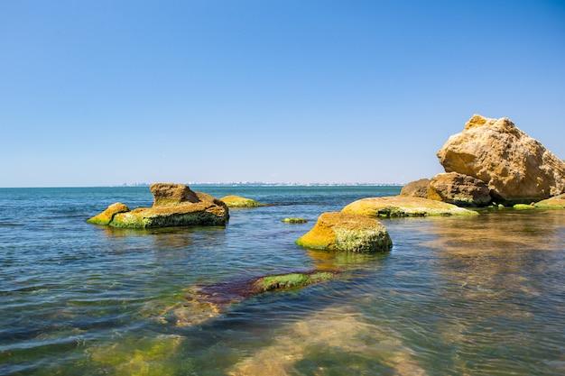 바다 돌에 조류. 녹색 조류는 바다 표면을 덮고 있습니다.