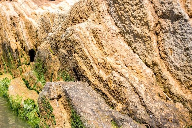 바다 돌에 조류.
