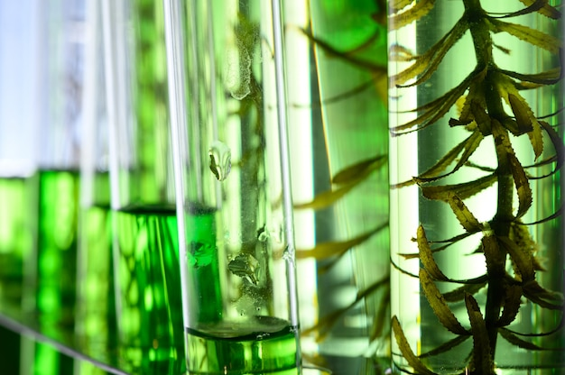 실험실에서 조류 연구, 생명 공학 과학 개념