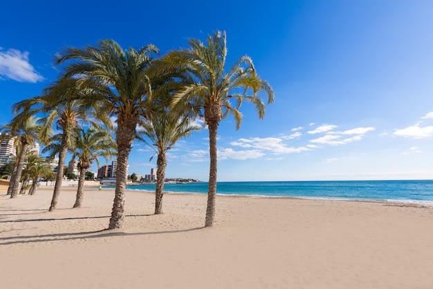 야자수 나무와 알리 칸테 산 후안 해변 la albufereta