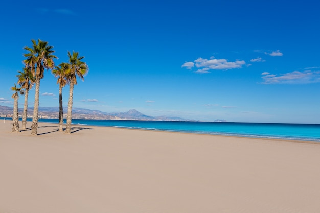 지중해의 야자수와 알리 칸테 산 후안 해변