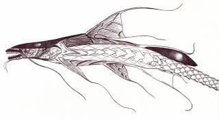 Alien catfish