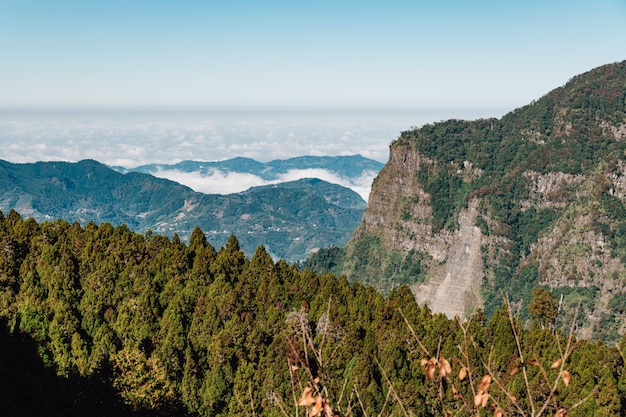 Alishan mountain with low cloud and fog on mountain and japanese cedar forest in foreground in alishan, taipei.