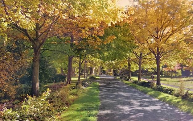 Аллея в красивом парке, окаймленная разноцветной листвой деревьев осенью в солнечный день