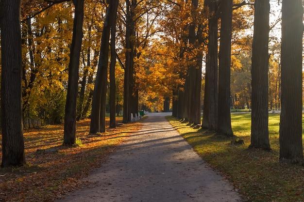 푸쉬킨 알렉산더 공원의 골목