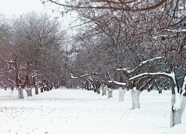 冬の日の美しい公園の路地