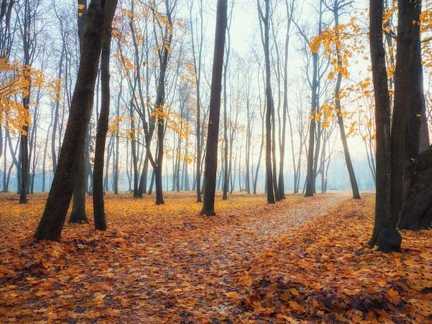 Аллея в туманном утреннем парке. красивый осенний туманный пейзаж с деревьями в лесу. мягкий фокус.