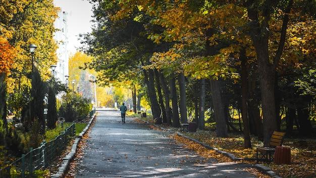 秋の公園の路地。男は朝、都市公園でジョギングします
