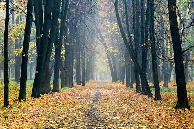 側面に木があり、地面に落ち葉がある秋の公園の路地