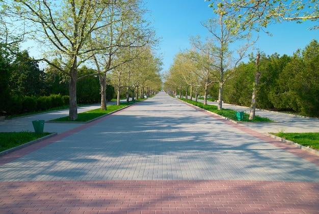 잔디와 나무와 녹색 화창한 공원 골목