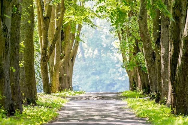 晴れた夏の天気の公園の路地