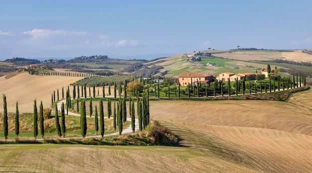 ヒノキの木と農地の路地イタリアの秋のトスカーナのヴァルドルチャ