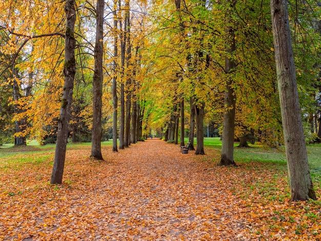 Аллея красных деревьев в павловском парке осенью, павловск, санкт-петербург, россия.