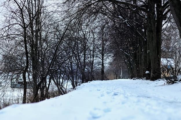 Alley tree park winter