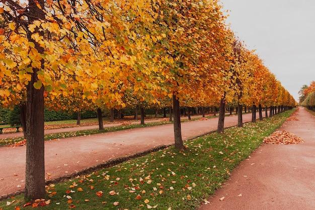 Аллея с полем, покрытым осенними листьями