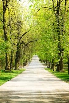 Аллея с зелеными деревьями в парке лазенки, варшава, польша. ретро тонированные /