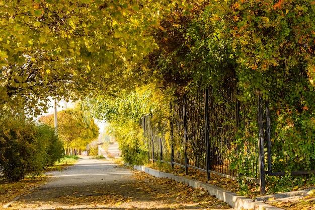 秋の都市公園のカエデの木のある路地