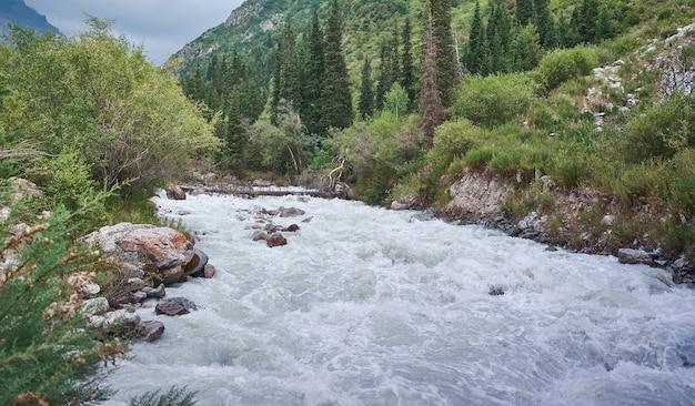 Аллея с рекой и лесом национальный парк ала арча