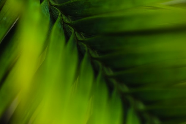 Сверху alm leaf