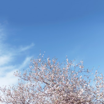 Almond tree and the sky