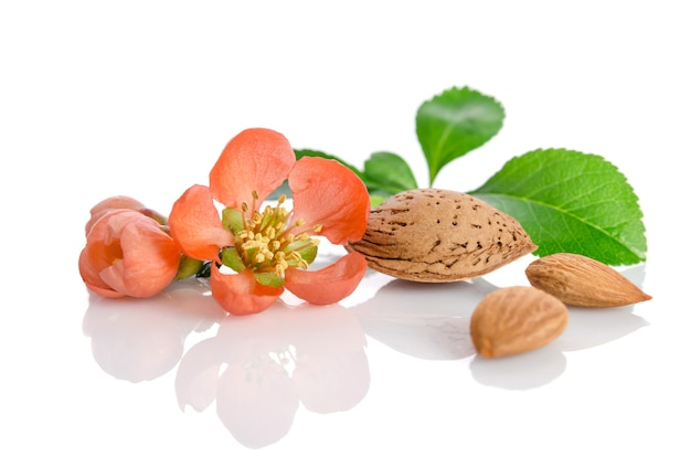 Almonds with leaves and flowers isolated on white