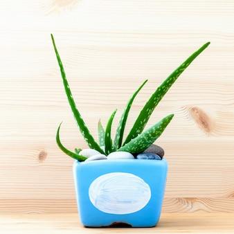 Aloe vera in blue pot on white wooden table.