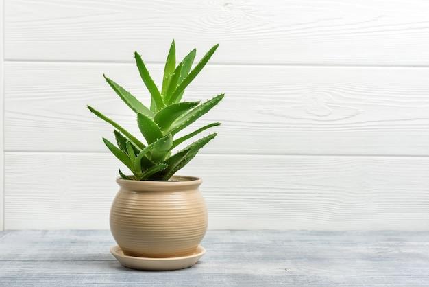 コピースペースのある木製の壁の壁にある鍋にアロエベラの花。