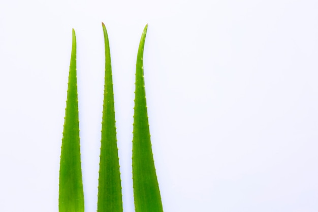 Aloe vera fresh leaves on white