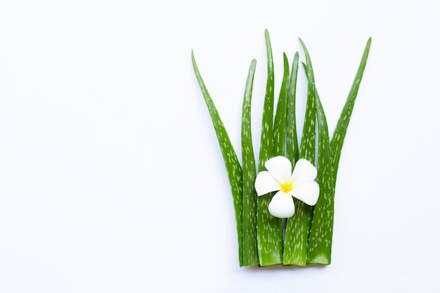 Aloe vera is a popular medicinal plant for health and beauty, on white background.